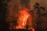 Peste 1,1 milioane de hectare, mistuite de flacari in estul Australiei