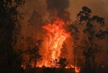 Incendii in Australia – Bilantul a urcat la 26 de morti; se prognozeaza inrautatirea conditiilor meteorologice