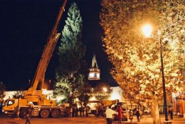 Baia Mare: Bradul de Craciun a fost instalat in Piata Libertatii
