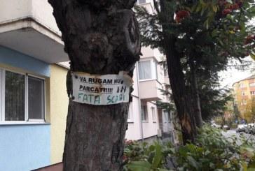 Fotografia zilei: Se cauta solutii…, strada Matei Basarab, Baia Mare