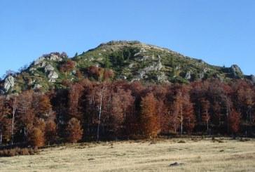 Se anunta impaduriri masive in padurile din zona Baia Sprie