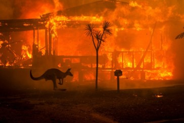 Incendii in Australia – Sute de milioane de animale ar fi pierit in incendiile de vegetatie