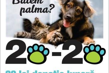 "Asociatia Salvati Animalele Baia Mare, apel la donatii: ""Ne ajutati? Ne revansam!"""