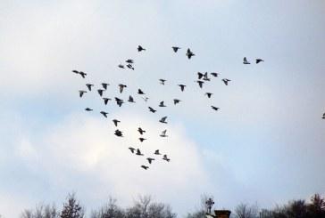 Imaginea zilei: In zbor