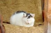 8 august – Ziua internaţională a pisicii