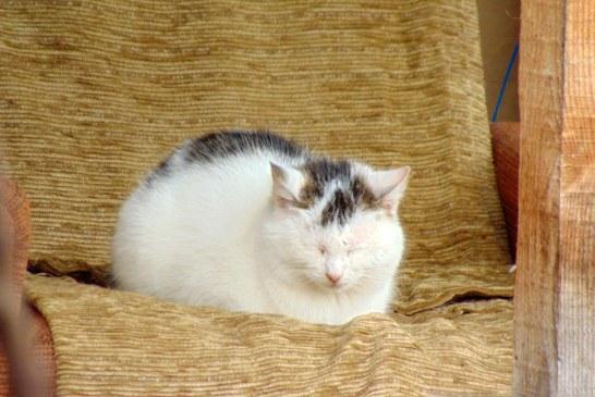 Imaginea zilei: Pisica la relaxare