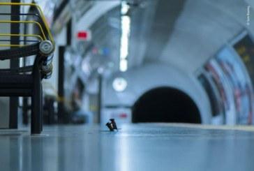 Doi soareci luptandu-se la metroul din Londra, aleasa de public cea mai buna fotografie cu animale a anului
