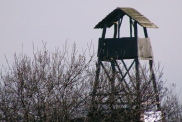 Imaginea zilei: Turn de observatie