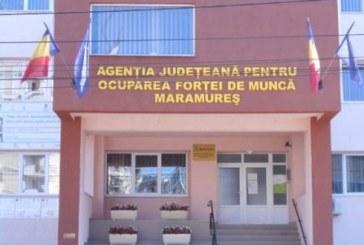 AJOFM Maramures: Unde pot obtine agentii economici informatii despre somajul tehnic sau zilele libere platite