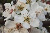 Imaginea zilei: Semnele primăverii