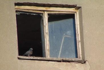 Imaginea zilei: Porumbei de apartament