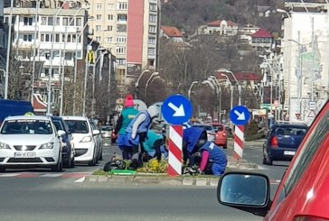 Baia Mare: Angajatii de la SPAU stau bot in bot la plantat de…panselute