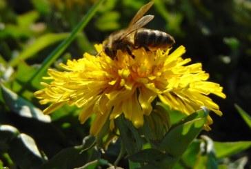Apicultorii solicită autorităţilor un sprijin financiar de 10 euro/familia de albine pentru compensarea pierderilor din sector