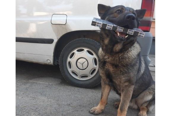 Baia Mare: O nouă reușită pentru câinele polițist Vis. A mirosit țigările de contrabandă ascunse într-o mașină (FOTO)