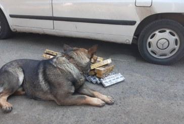 """""""Contrabandişti, v-am promis: voi nu mai scăpaţi de VIS!"""": O nouă captură a câinelui polițist, în Baia Mare"""