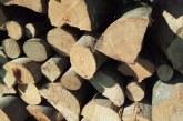 Acţiune privind respectarea regimului silvic la Budeşti