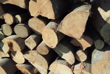 Material lemnos confiscat la Suciu de Sus