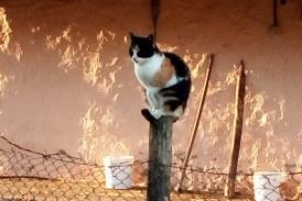 Imaginea zilei: Pisică la înălțime