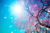 Luna mai 2020, cea mai caldă lună înregistrată vreodată