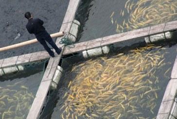 MADR: Ajuror de stat pentru reducerea accizei la motorină în acvacultură