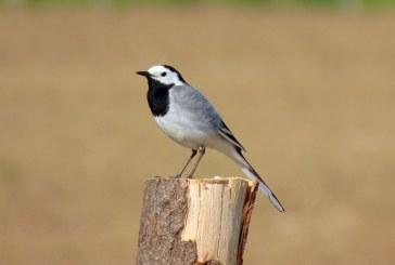 Prinderea păsărilor cu ajutorul cleiului este ilegală Franţa, a hotărât cea mai înaltă curte de apel