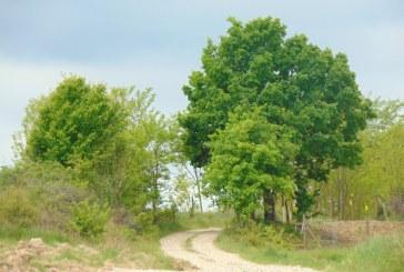 Prognoza meteo pentru duminică, 14 iunie, în Maramureș
