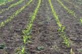 APIA a autorizat până în prezent la plata în avans 547.311 fermieri