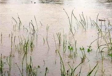 Alte două localități din Maramureș au fost afectate de furtună