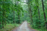 Planeta a pierdut aproape 100 de milioane de hectare de pădure în ultimele două decenii