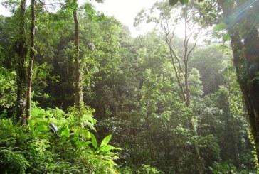 Plantele din pădurile tropicale dense sunt capabile să-şi mascheze mirosurile pentru a evita să fie detectate şi mâncate