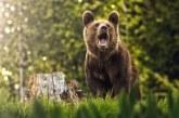 NOUTĂȚI – Cazul ursului Arthur a schimbat legislația