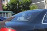 Imaginea zilei: Câine la relaxare, în mașină