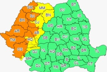 Cod galben în Maramureș, Crișana și Banat
