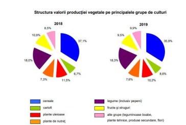 INS: Valoarea producţiei ramurii agricole a scăzut cu 3,8% în 2019