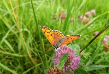 Imaginea zilei: Un fluture și mai multe culori