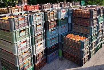 Fructe și legume confiscate în Baia Mare și Borșa