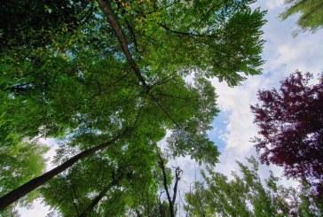 Meteo: Soare și temperaturi în creștere, joi, în Maramureș