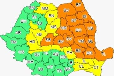 Cod galben de ploi în Maramureș, local în Transilvania, Muntenia și sudul Dobrogei