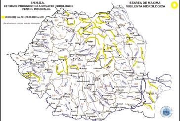 Cod galben pe râurile Vișeu, Iza, Someș și alte bazine hidrografice din țară