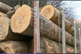 Amenzi uriașe pentru companiile austriece Holzindustrie și Kronospan pentru formarea unui cartel pe piața lemnului