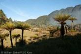 Noua Guinee este insula cu cea mai mare diversitate de plante din lume