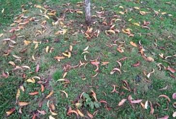 Prognoza meteo în Maramureș până în 8 noiembrie