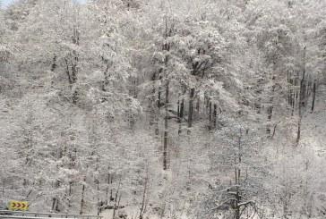Autocamion blocat în Pasul Gutâi din cauza zăpezii. Administratorul drumului a fost sancționat