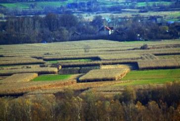 Alianţa pentru Agricultură şi Cooperare solicită plata despăgubirilor pentru culturile de primăvară în regim de urgenţă