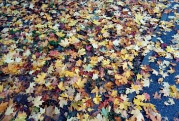 Află prognoza meteo în Maramureș până în 15 noiembrie