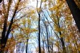 Află prognoza meteo în Maramureș până în 22 noiembrie