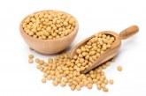 Franţa caută să-şi reducă dependenţa de importurile de soia boabe din America Latină