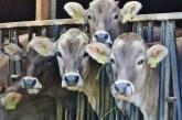 Scăderea consumului cărnii de vită ar salva vieți