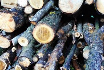 Pădurile Maramureșului, tăiate fără încetare: Peste 170 mc de material lemnos confiscat în ultimele zile