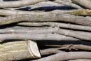 Controale în domeniile silvic și piscicol din Maramureș